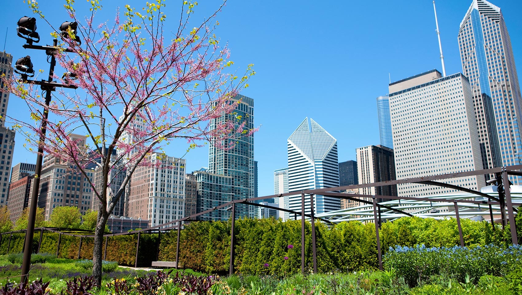 Millennium Park Chicago, trees, skyline